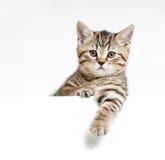 Kat of katje achter uithangbord wordt geïsoleerd dat Royalty-vrije Stock Foto's