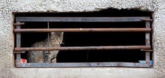 Kat in kelderverdiepingsvenster stock afbeeldingen