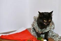 Kat in Kerstmisspeelgoed en slingers royalty-vrije stock foto