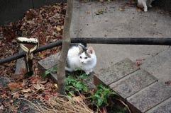 Kat klaar op te springen Royalty-vrije Stock Afbeeldingen