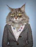 Kat in kleren Royalty-vrije Stock Afbeeldingen