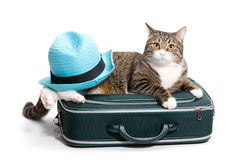 Kat, koffer en hoed Royalty-vrije Stock Fotografie