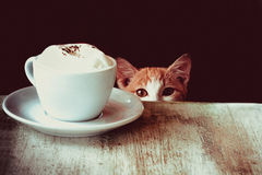 Kat & Koffie Royalty-vrije Stock Afbeeldingen