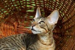 Kat in Mand Royalty-vrije Stock Afbeeldingen