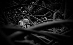 Kat in mangrove stock foto's