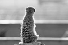 kat-meer Royaltyfri Foto
