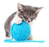 Kat met bal van garen stock foto's