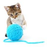 Kat met bal van garen stock foto