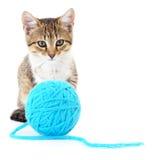 Kat met bal van garen royalty-vrije stock afbeelding