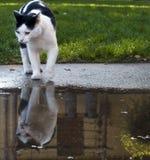 Kat met Bezinning Royalty-vrije Stock Afbeelding