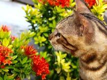 Kat met bloem in volle bloei Royalty-vrije Stock Foto's