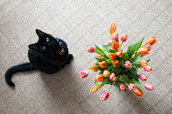 Kat met bloemen Stock Afbeelding