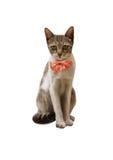 Kat met boog Royalty-vrije Stock Foto