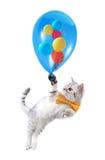 kat met boog en ballons Stock Afbeelding