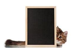 Kat met bord Royalty-vrije Stock Afbeeldingen