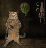 Kat met cactuse 1 stock afbeelding