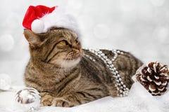 Kat met de Decoratie van Kerstmis Royalty-vrije Stock Afbeeldingen