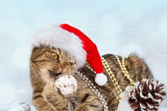 Kat met de Decoratie van Kerstmis Stock Fotografie