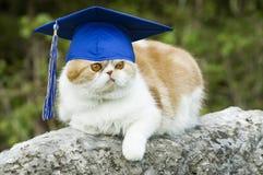 Kat met de Hoed van de Graduatie stock fotografie