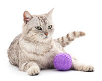 Kat met een bal Stock Foto's