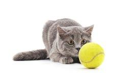 Kat met een bal Stock Foto