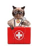 Kat met een eerste hulpuitrusting Stock Foto's