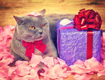 Kat met een giftdoos Stock Afbeelding