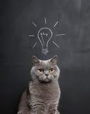 Kat met een helder idee Royalty-vrije Stock Afbeeldingen