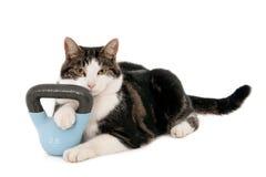 Kat met een ketelklok Royalty-vrije Stock Afbeeldingen