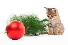 Kat met een nieuwe jaarbal stock foto's