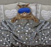 Kat met een slaapmasker in het bed stock fotografie
