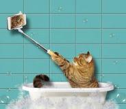 Kat met een telefoon in een badkamers stock afbeelding