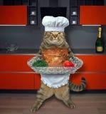 Kat met gebakken rundvlees in keuken stock afbeelding