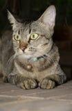 Kat met geel oog Royalty-vrije Stock Afbeelding