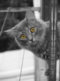 Kat met gele ogen Stock Foto's