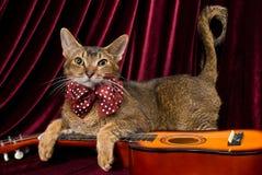 Kat met gitaar royalty-vrije stock afbeeldingen