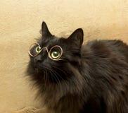 Kat met glazen stock afbeelding