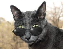Kat met glazen Royalty-vrije Stock Afbeelding