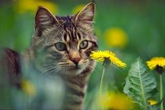 Kat met gras en bloem stock afbeelding