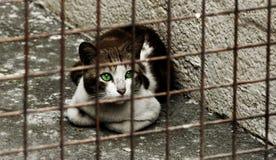 Kat met groene ogen royalty-vrije stock afbeeldingen