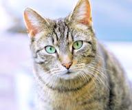 Kat met groene ogen stock foto's