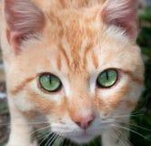 Kat met groene ogen Royalty-vrije Stock Foto's