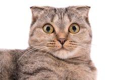 Kat met grote ogen op een witte achtergrond royalty-vrije stock fotografie