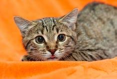Kat met grote ogen op sinaasappel stock fotografie