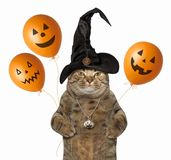Kat met Halloween-ballons stock afbeeldingen