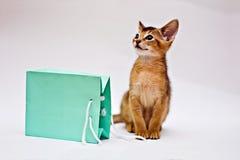 Kat met het winkelen zak Royalty-vrije Stock Afbeeldingen