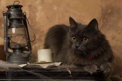 Kat met kerosinelamp en kaars stock foto