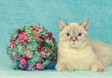 Kat met Kerstmis het kussen boeg royalty-vrije stock afbeeldingen