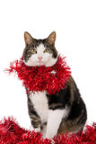 Kat met Kerstmisslingers Stock Foto
