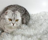 Kat met klatergoud Stock Afbeeldingen